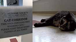 Humane Society Of Richland County Unveils New 'Cat Corridor'
