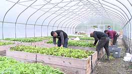 OSU Mansfield Micro-Farm Begins First Harvest