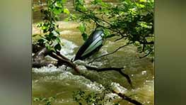 Male Transported After Being Pinned By Tree In River